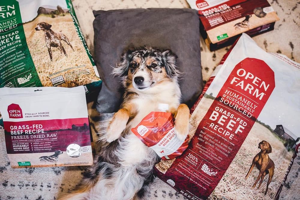 Open Farm Pet Food Review: Premium Nutrition, Ethically Sourced
