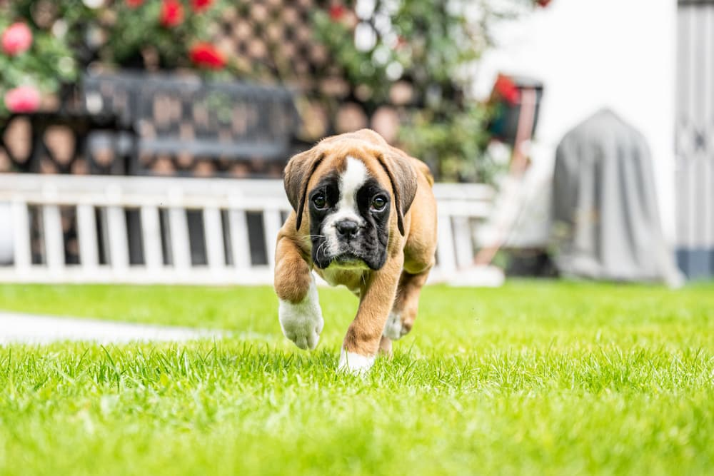 Bringing a Puppy Home: 5 Steps to Survive the First Week