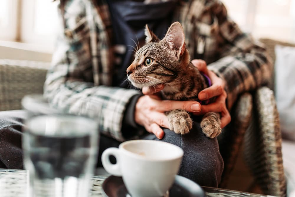 Cat sitting in a cafe smelling coffee and what smells do cats hate