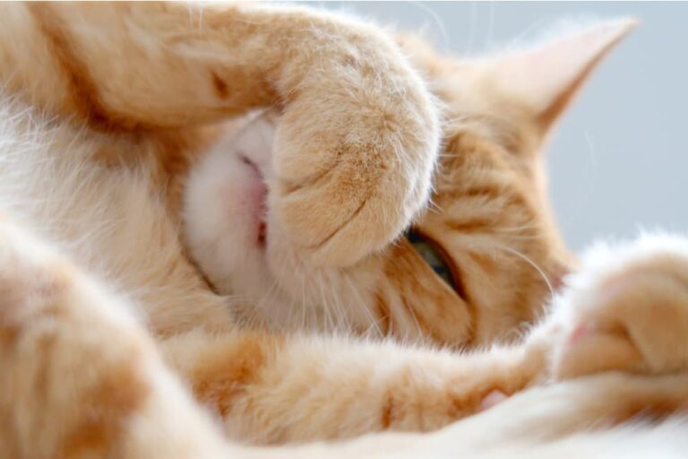 Cat covering nose because of smell it hates