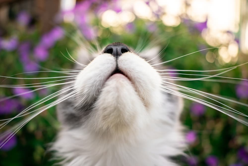 Understanding smells cats hate with picture of close up of cat's nose