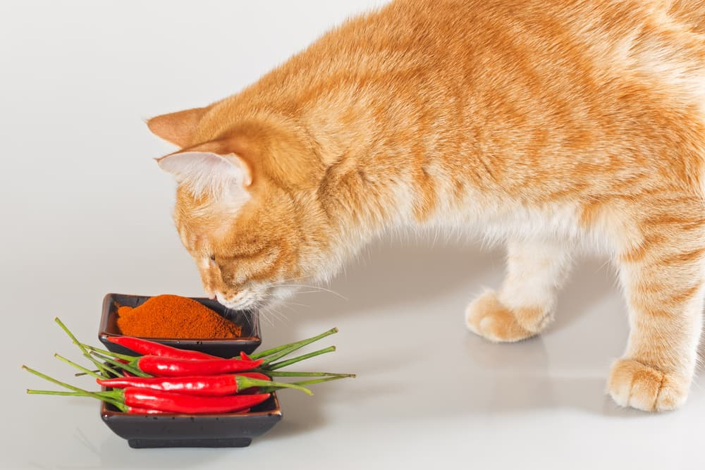 Cat smelling peppers and hates the smell