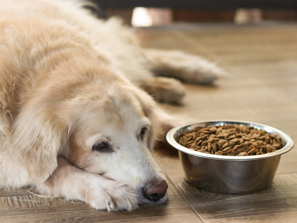 10 Hidden Signs Your Dog Is Stressed Out