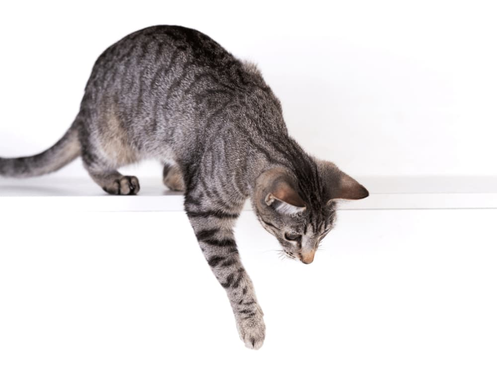 Why Isn't My Cat Jumping Any More?