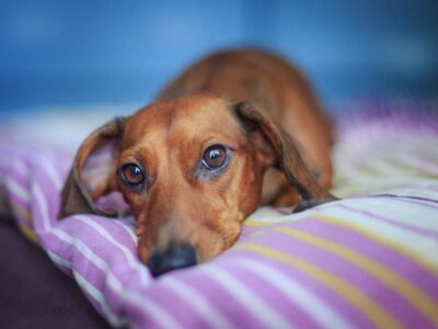 6 Causes of Back Pain in Dogs