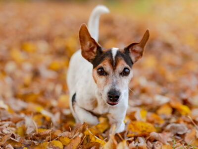Glucosamine for Dogs: Supporting Hip and Joint Health